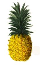 Pineapple+Watercolour